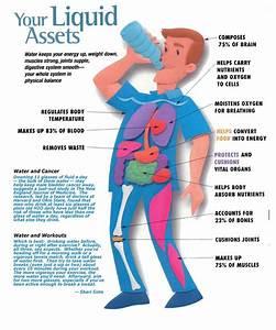 Importance Of Drinking Water   U559d U6c34 U7684 U91cd U8981 U6027