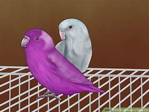 How to Choose a Parrotlet: 14 Steps (with Pictures)