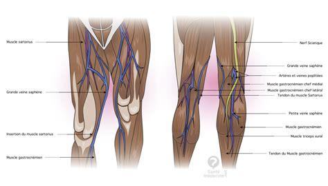 douleur au genou gauche interieur veine saph 232 ne d 233 finition sant 233 m 233 decine