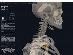 Muscles  U2013 Page 21  U2013 Anatomy  U0026 Physiology