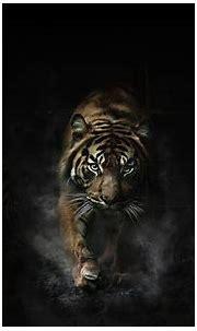 Tiger Wallpapers - Wallpaper Cave