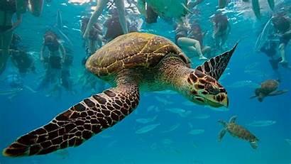 Underwater Wallpapers Turtles Swim