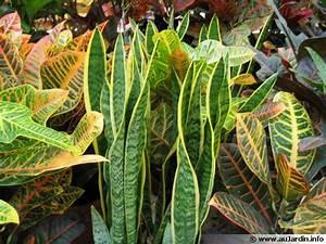 Plante D Intérieur : plantes d 39 int rieur ~ Dode.kayakingforconservation.com Idées de Décoration