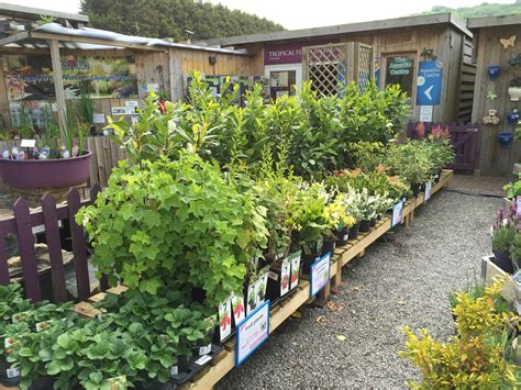 top 28 bridgend garden centre plants and flowers