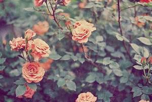 vintage rose on Tumblr