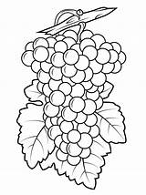 Grapes Coloring Pages Grape Printable Drawing Purple Leaf Template Grapevines Fruit Colouring Bilder Clip Fruits Clipart Da Ausmalen Ausmalbilder Designs sketch template