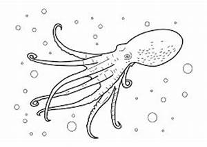Coloring, Coloring pages and Jellyfish on Pinterest