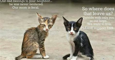 Spay And Neuter  About Cat  Pinterest  Cat, Animal And
