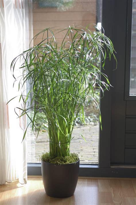 plante verte pour chambre plante verte dans une chambre plante pour salon plante