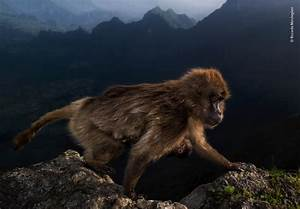Stunning Shots Take Top Prizes in the 2019 Natural History Museum Wildlife Photographer of the ...