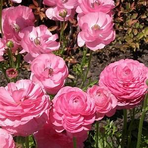 plante de bordure liste ooreka With modele de rocaille de jardin 17 fleurs de bordure liste ooreka