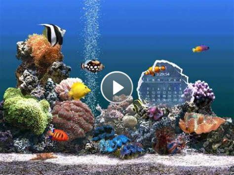 fond d 233 cran aquarium gratuit