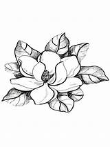 Magnolia Coloring Flower Pages Drawing Flowers Tree Sketch Tattoo Outline Drawings Colouring Pattern Ms Southern Louisiana Adult Rick Trees Printable sketch template