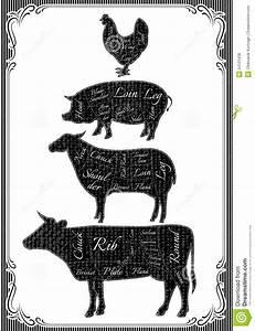 Diagram Cut Carcasses Of Chicken  Pig  Cow  Lamb Stock Vector