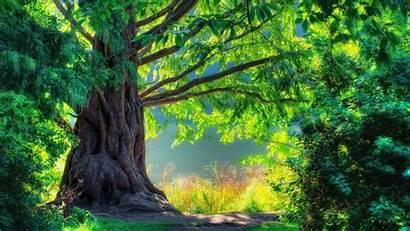 Nature Wallpapers Tree Wallpapersafari 1080p