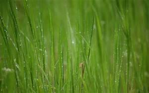 Gambar-Gambar Rumput yang Tinggi wallpaper