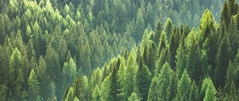 Nachhaltige Waldwirtschaft