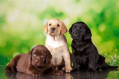 Breeds Dog Popular Canada Shutterstock Via Unplash