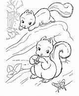 Coloring Squirrel Preschool Animals Popular sketch template