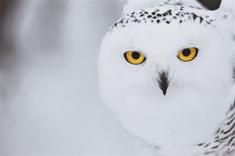 images  feathered friends  pinterest white
