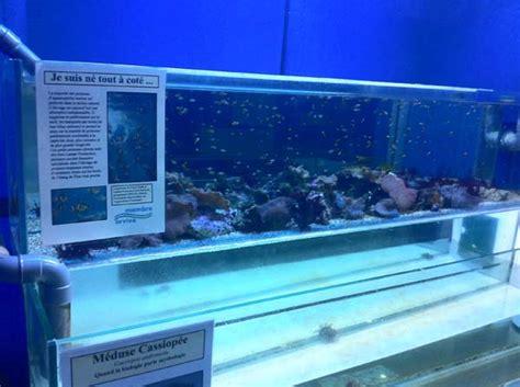aquarium marin du cap d agde les coulisses de l aquarium du cap d agde aquarium r 233 cifal aquarium marin aquarium eau de