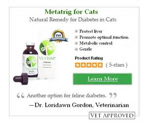 cat diabetes symptoms symptoms of diabetes in dogs and cats