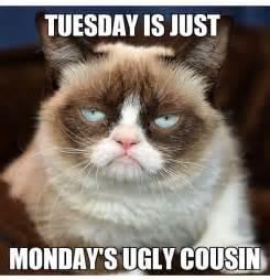 grumpy cat monday tuesday is just monday s cousin grumpy cat