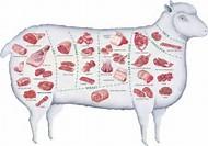 Lamb Meat Cuts Diagram