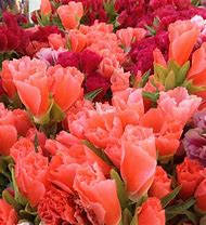 Coral Colored Flowers