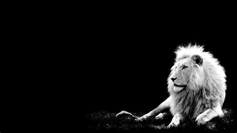 White Lion Hd Wallpapers For Pc 6357