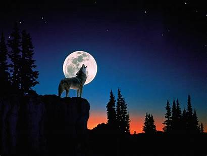 Wolf Howling Wallpapers Moon Wolves Night Howl