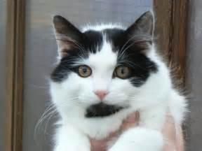 fiv cats
