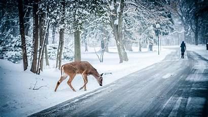 Winter Scenes Animal Wallpapersafari