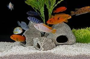 Bilder Mit Fischen : aquarium fische die arten ihre anspr che ~ Frokenaadalensverden.com Haus und Dekorationen