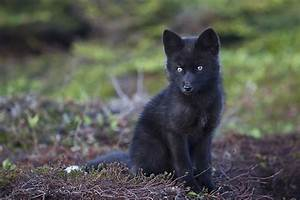 Baby Foxes - Moments Ago 2 by Witch-Dr-Tim on DeviantArt
