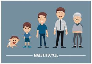Free Male Lifecycle Vector