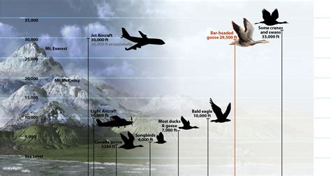 super birds fly higher than commercial aircraft top mount