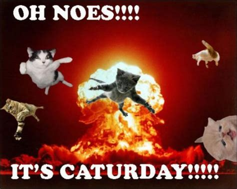 Caturday Meme - image 181602 caturday know your meme