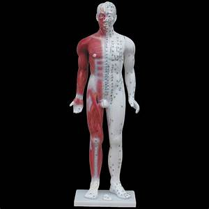 84cm Acupuncture Model With Manual  Full Body