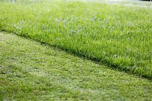 Mulchen Mit Grasschnitt : rasen m hen oder rasen mulchen was ist besser plantura ~ Lizthompson.info Haus und Dekorationen
