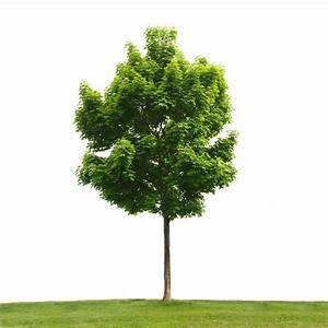 Trees   Madison Parks Foundation