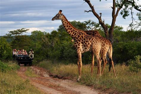 5-star African Safari With Unique Zambezi Queen River