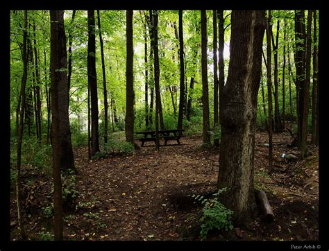 wooded garden theme wood need an idea olympus om d resources