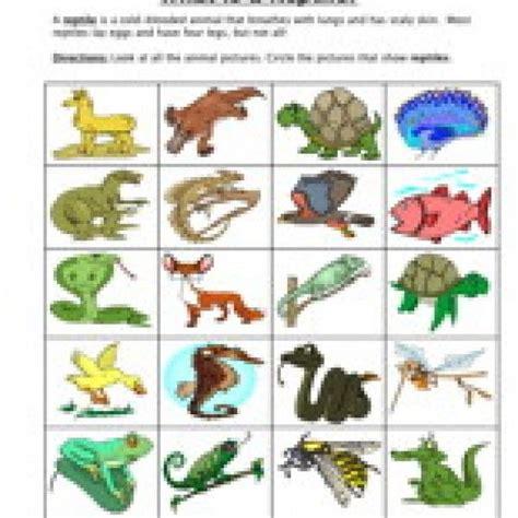 reptile classification worksheet reptiles and worksheets