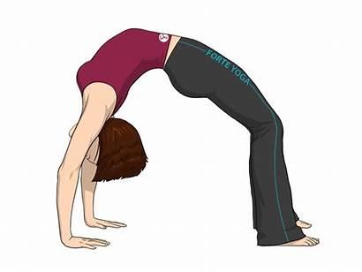 Pose Yoga Bow Upward Wheel Facing Backbend
