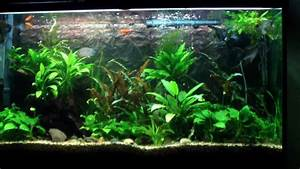 Freshwater Aquarium with Clown Pleco. Angelfish. Gourami ...