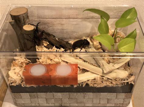 カブトムシ 飼育 ケース