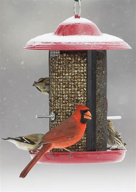 cardinal bird feeder how to birds winter bird care