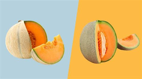 muskmelon  cantaloupe whats  difference