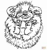Porcupine Coloring Cute Baby Pages Printable Porcupines Drawing Designlooter Supercoloring Version 04kb 1040 Drawings Categories sketch template